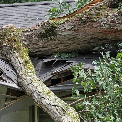 Tree Fell, Need Roof Repair